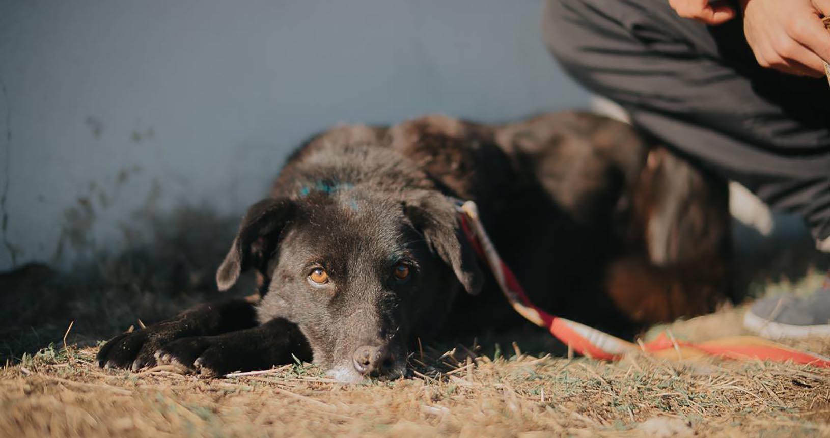 куче пазач Варна