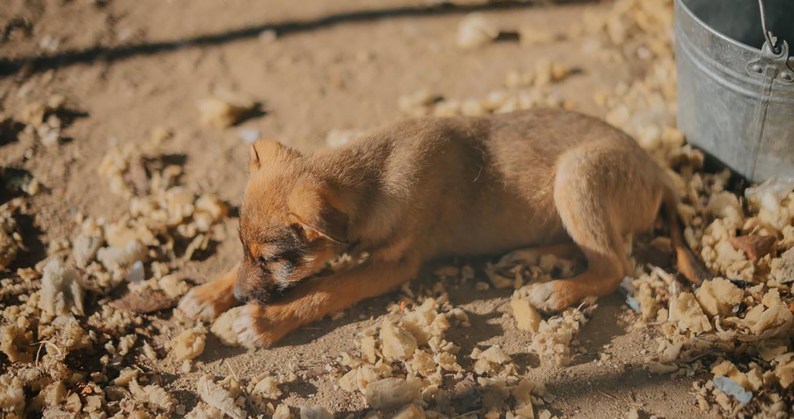 малко куче Варна ОПБК