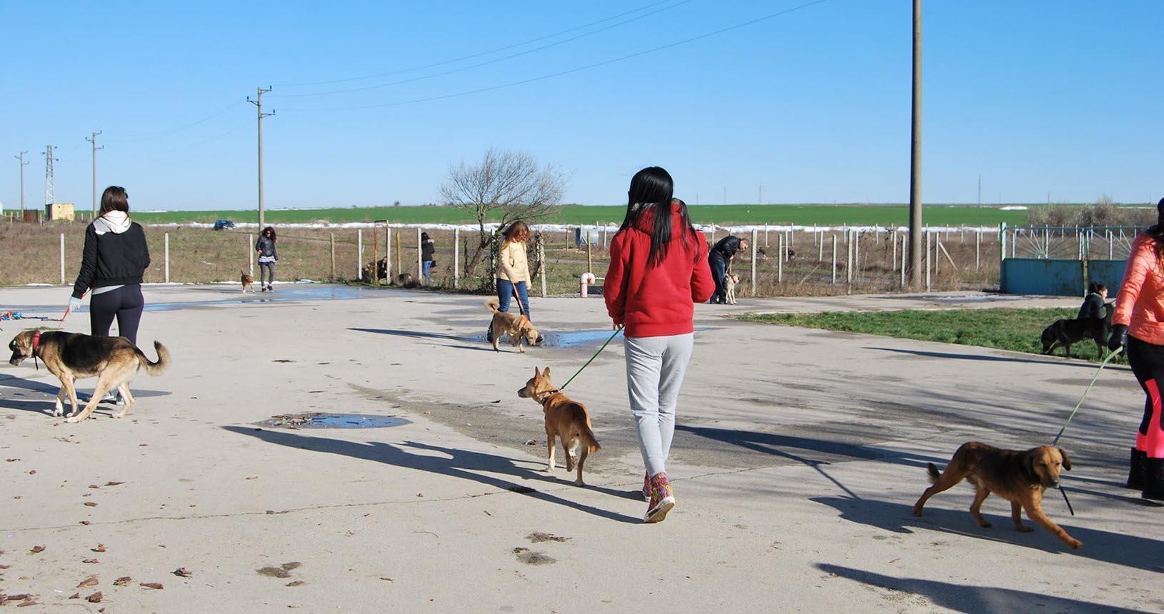 Разходна на кучета Варна
