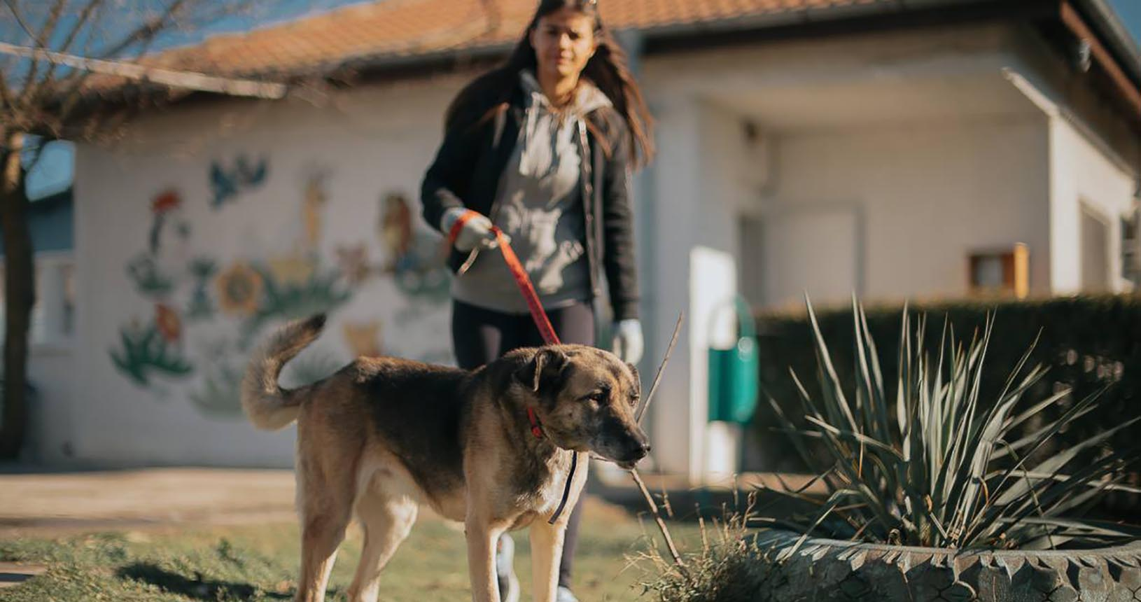 куче пазач Варна души