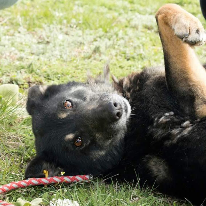 куче, което си играе