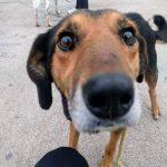 виж кучето от Варна