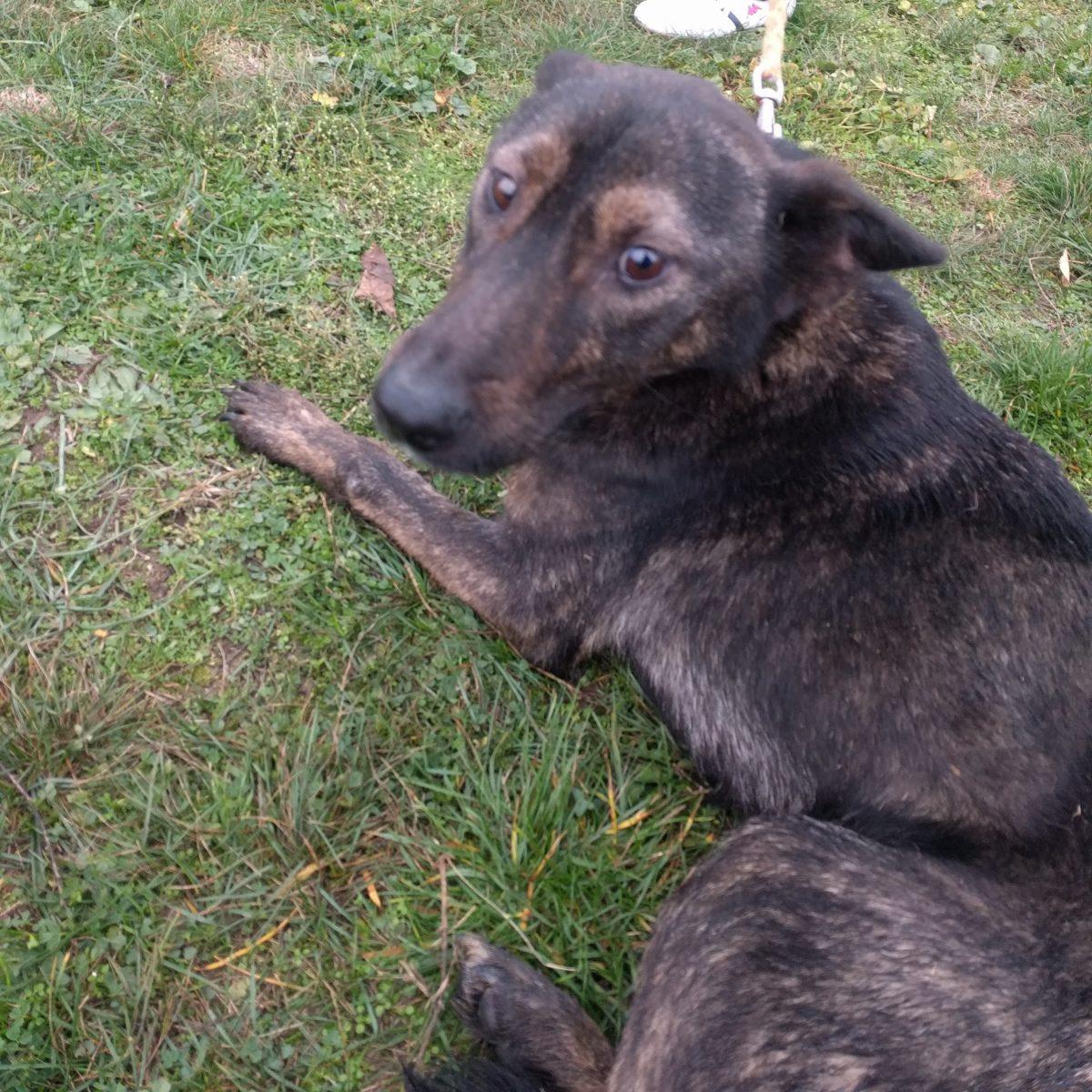 куче на трева