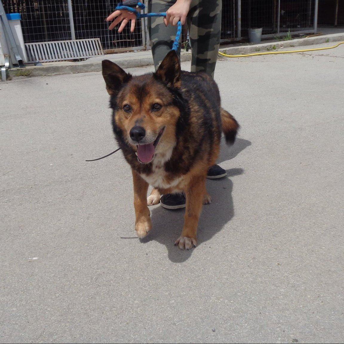 куче от Варна