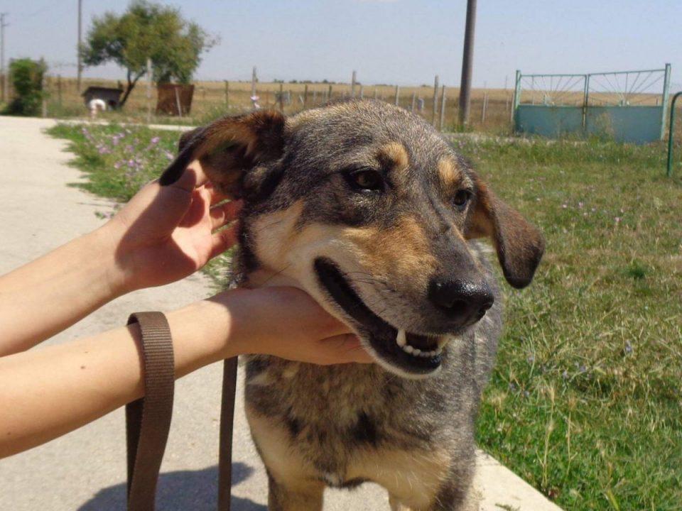 куче Варна