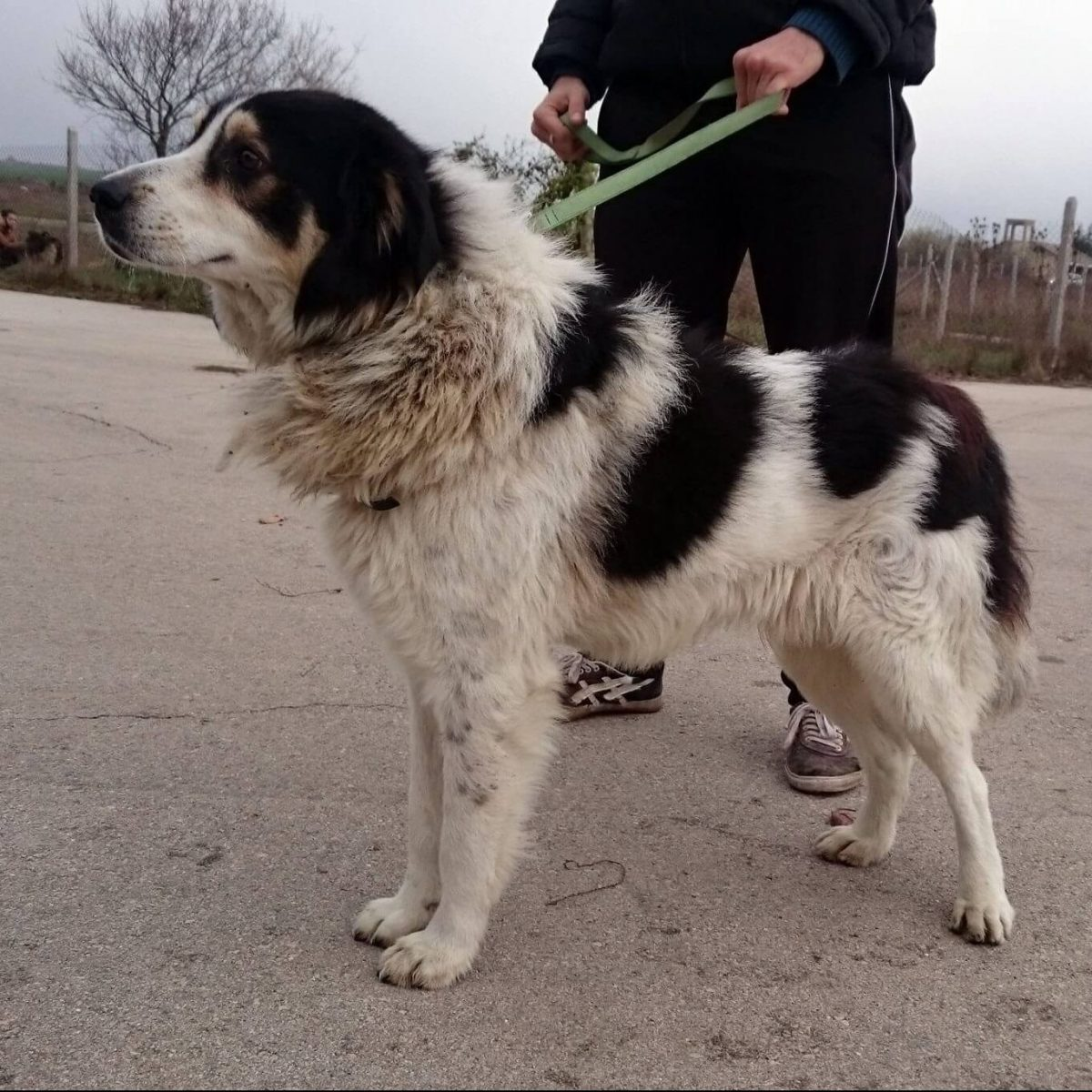 рошаво куче от ОПБК Варна