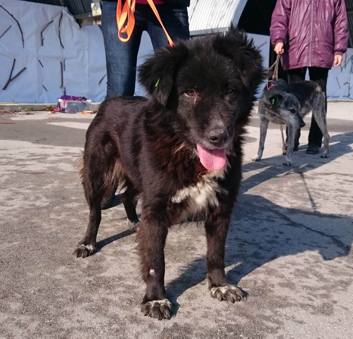 черно кученце