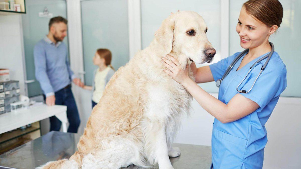 Обява за ветеринар Варна